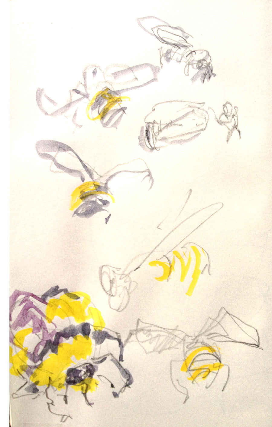 Bumble Bee Watercolor Sketches Moveable Paintbox