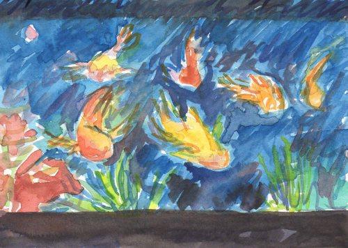 fish tank at night