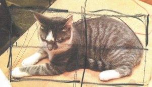 cat sketch tutorial