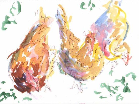chickens watercolor