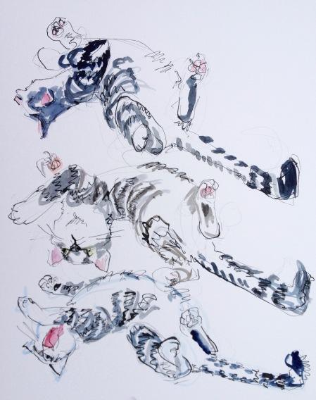 wriggling cat