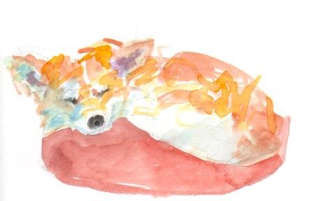 corgi sleeping