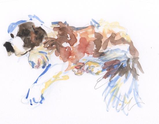st. bernard, napping