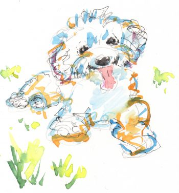 bichon watercolor