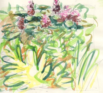 Rhododendrons sketch