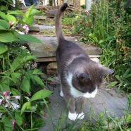 cat-on-garden-path