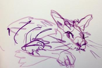cat gesture sketch
