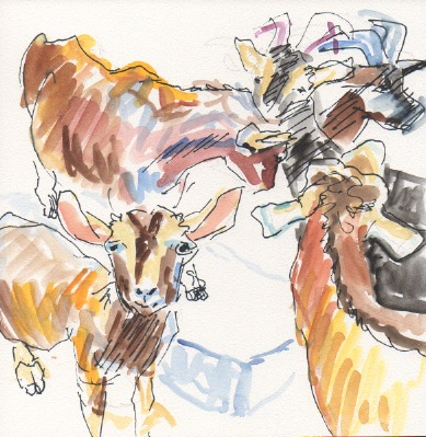 goat-sketch